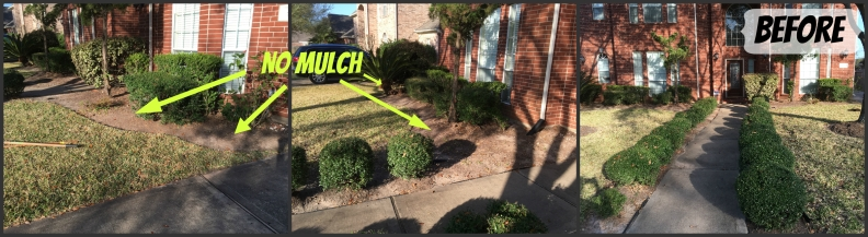 before mulch